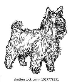 Yorkshire terrier illustration, drawing, engraving, ink, line art, vector