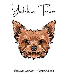 Yorkshire terrier portrait. Cute animal. Dog breed. Vector illustration