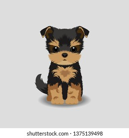 Yorkshire Terrier Puppy Vector Illustration. Dog isolated