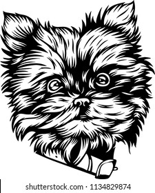 Yorkshire Terrier Yorkie lap breed face head isolated pet animal domestic pet collection set canine puppy purebred pedigree hound portrait peeking paws smiling happy vector art artwork illustration