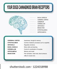you dogs cannabinoid brain receptrs