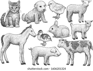 Young animal collection, illustration, drawing, engraving, ink, line art, vector