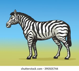 Young cute big funny stripy equid standing in grassland savannah plain. Freehand outline ink hand drawn picture sketchy in art scribble style. Side view with space for text on blue sky