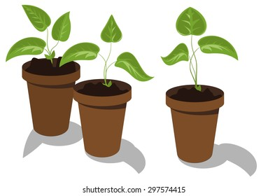 Young flower seedlings in pots