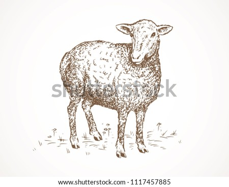 Young Lamb Drawing Stock Vector Royalty Free 1117457885 Shutterstock