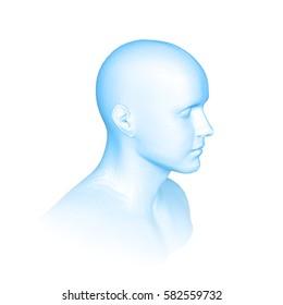 Young man face portrait. 3d head vector illustration, blue color