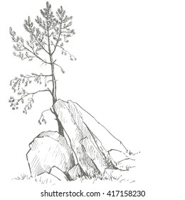 young pine tree and rocks drawing by ink, sketch of wild nature, forest doodle, hand drawn vector illustration
