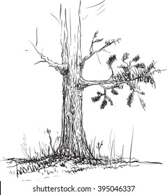 young pine trees drawing by pencil, hand drawn vector illustration