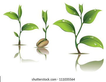 Young plant life process on white background