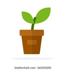 A young plant in a pot vector flat material design isolated on white