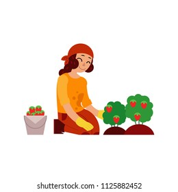 Young woman farmer gathering ripe strawberries from bushes isolated on white background - female character with red mature berries for eco-friendly and organic concept in flat vector illustration.