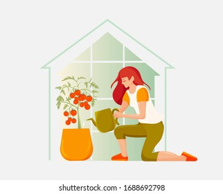 Young woman gardener watering tomato plants with a can in a greenhouse. Home growing or Home garden concept vector illustration.