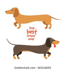 Your best friend ever. Vector flat illustration of two dachshunds, ginger and brown, on white background