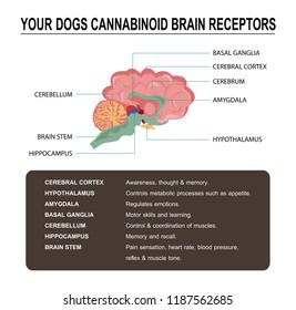 your dogs cannabinoid brain receptors