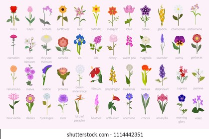 Your garden guide. Top 50 most popular flowers infographic. Vector illustration