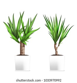 Yucca tree in a pots. Hand drawn vector illustration on white background. Element of home decor. The symbol of growth and ecology. Vector illustration. Eps 10