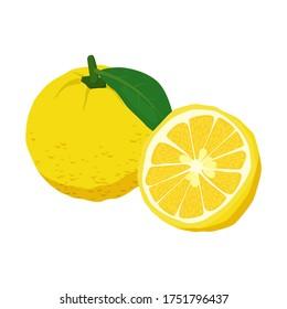 Yuzu fruit on white background. Vector illustration