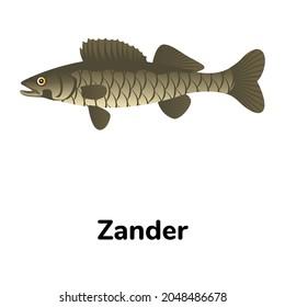 Zander fish, flat icon of sander lucioperca