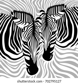 Zebra Couple background. Black, gray and white, vector illustration. Animal skin print texture.