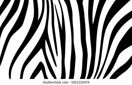 Zebra. Decorative background for design. Vector
