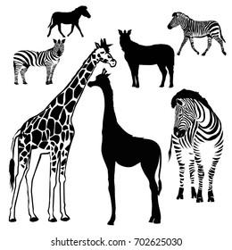 Zebra, giraffe, animal, vector, illustration