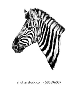 a Zebra head profile sketch vector
