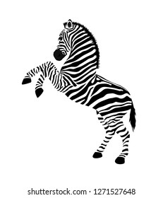 Zebra with hind legs. Wild animal texture. Striped black and white. Vector illustration isolated on white background.