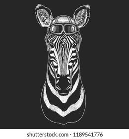 Zebra, horse wearing aviator hat. Print for children clothes, tee, t-shirt. Pilot wild animal