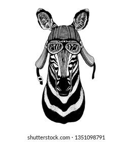 Zebra, horse wild biker animal wearing motorcycle helmet. Hand drawn image for tattoo, emblem, badge, logo, patch, t-shirt.