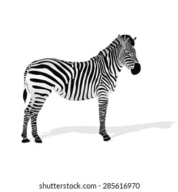 zebra icon. black stripes. animal symbol