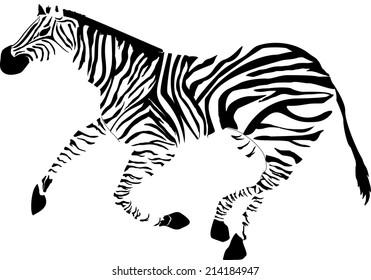 Zebra image isolated on white