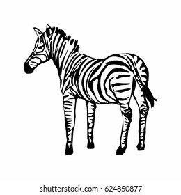 Zebra isolated on white background. Hand drawn stripped horse sketch.