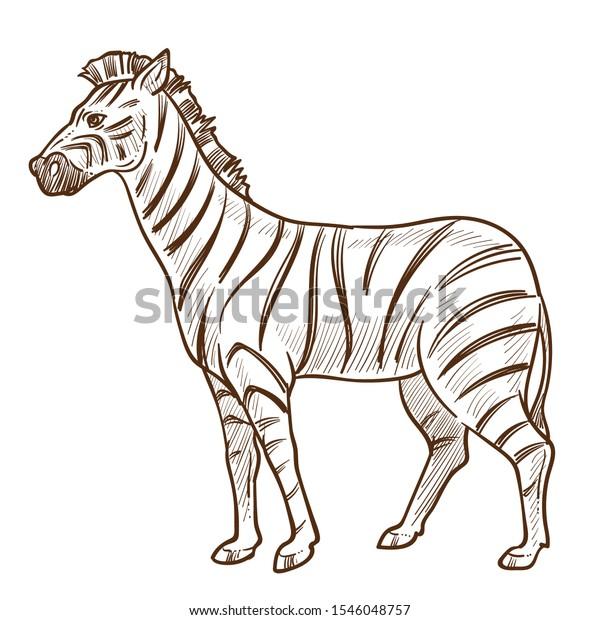 Zebra Isolated Sketch African Savannah Wild Stock Vector (Royalty ...