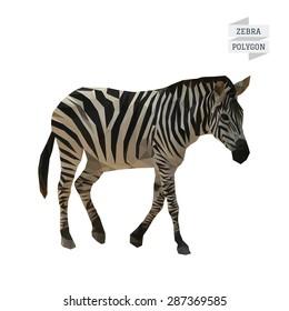 Zebra polygon vector