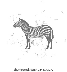 zebra.  Polygonal wireframe zebra silhouette. low poly vector illustrations on background of points and lines.