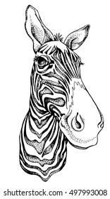 Zebra portrait. Vector black and white illustration.
