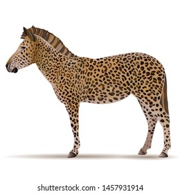 zebra in the skin of a leopard, a leopard in the body of a zebra, absurdism, contradiction, not in its own skin, uniqueness