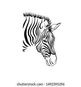 zebra stock vector illustration poster isolated on white background