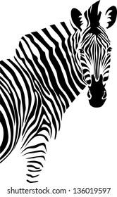 Zebra. Vector.