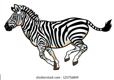 zebra,equus burchell,side view picture isolated on white background,vector illustration