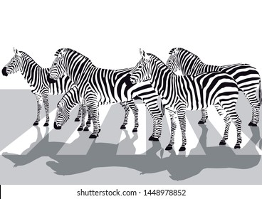 Zebras on the crosswalk,  Illustration