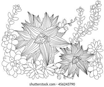 Zen Tangle Adult Coloring Book Succulent Secret Garden Line Art