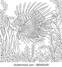 Zentangle stylized cartoon zebrafish (lionfish,pterois volitans) is swimming around plants. Sketch for adult antistress coloring page. Hand drawn doodle, zentangle design elements for coloring book.
