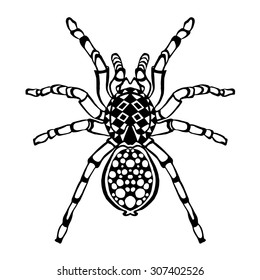 Zentangle stylized spider. Animals. Black and white hand drawn doodle. Ethnic patterned vector illustration. African, indian, totem tatoo design. Sketch for avatar, tattoo, poster, print or t-shirt.