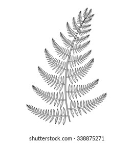 Zentangle vector Fern for tattoo in boho, hipster style. Ornamental tribal patterned Grass illustration for adult anti stress coloring pages. Hand drawn isolated black sketch. Plant collection.