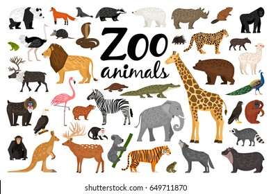 Image result for zoo animal pictures