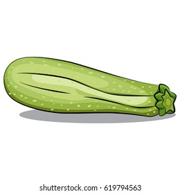 Zucchini or courgette vector isolated on white background. Hand drawn cartoon illustration vegetable. Eating healthy and vegan food.