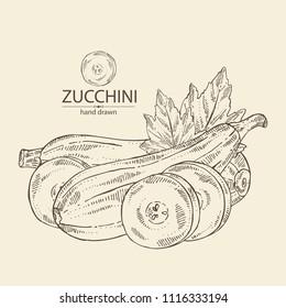 Zucchini: full zucchini, slice of zucchini, leaf. Vector hand drawn illustration.