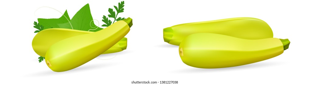 Zucchini isolated on background. Squash whole. Fresh vegetable marrow isolated. Oblong, green squash. Vegetable marrow courgette or zucchini. Harvest courgette organic ingredient. Vector illustration