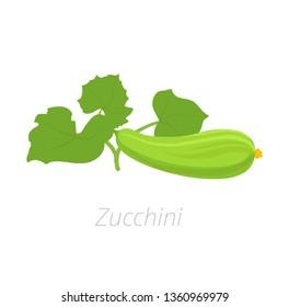 Zucchini plant. Zucchini or courgette plant. Vector illustration. Cucurbita pepo. On white background.